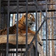 Абзаково Зоопарк