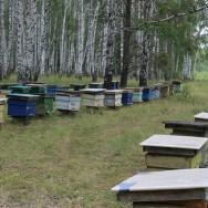 Экскурсия на пасеку в Абзаково