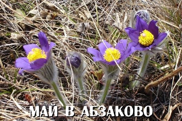 Май 2015 в Абзаково